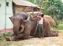 Elephant  in Chitwan, Nepal Stock Photography
