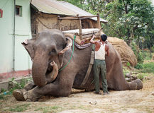 Elephant  in Chitwan, Nepal Stock Image