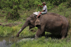Elephant in Chitwan park Stock Photos