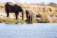 Elephant - Chobe River, Botswana, Africa Stock Images