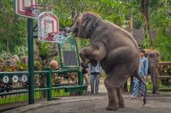 Elephant circus. Stock Photography