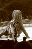 Elephant circus act Stock Photo