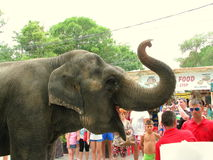 Elephant from the circus in Eforie Sud, Romania Stock Photography