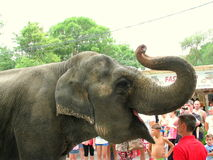 Elephant from the circus in Eforie Sud, Romania Royalty Free Stock Photography