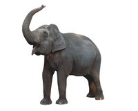 Elephant, clip-pathed Royalty Free Stock Photos