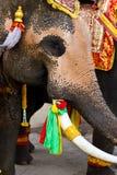 Elephant close up Royalty Free Stock Image