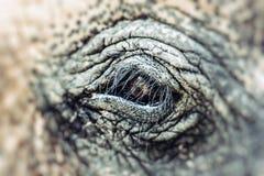 Elephant close up with beautiful orange eye and long lashes, South Africa. HDR image Stock Photo