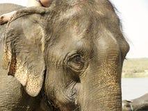 Elephant Closeup Stock Photo
