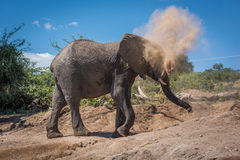 Elephant in cloud of dust on hillside Stock Images