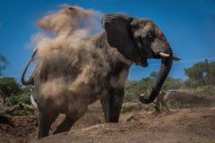 Elephant in cloud of dust beside logs Royalty Free Stock Photo