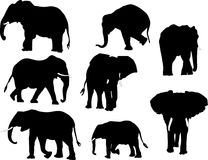 Elephant collection Stock Photography