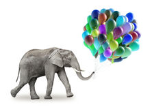 Elephant with a colorful balloons Royalty Free Stock Photo