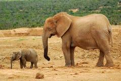 Elephant Cow With Baby Stock Photos