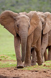 Elephant Creche Royalty Free Stock Photo