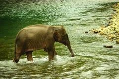 Elephant& x27; criança de s foto de stock royalty free