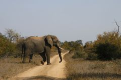 Elephant Crossing 2 Royalty Free Stock Image
