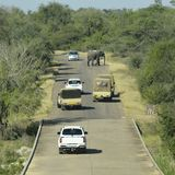 Elephant crossing and blocking road in safari park. Elephant crossing and blocking  tar road in safari park. Picture was taken in Kruger National Park, South Royalty Free Stock Photography