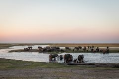Elephant crossing at the chobe river stock image