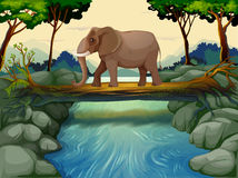 An elephant crossing the river Stock Image
