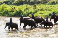 Elephant crossing river Royalty Free Stock Photos