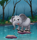 An elephant crossing the river by means of the big stones Stock Image