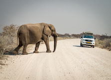 Elephant Crossing the Road Royalty Free Stock Photography