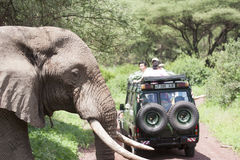 Elephant crossing road on safari. An elephant crosses the road as tourists on safari watch Royalty Free Stock Images