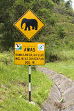 Elephant Crossing Stock Image