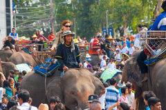 Elephant Crowd Passenger Trainer Stock Photography