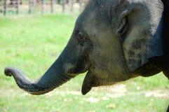 Elephant cub Stock Photo