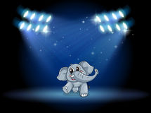 An elephant dancing at the stage under the spotlights Stock Images