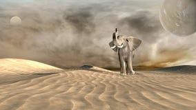 Elephant on desert Stock Photos