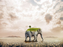 Elephant in the desert Royalty Free Stock Photography