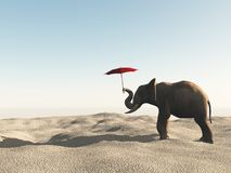 Elephant in the desert with umbrella. Stock Photo