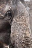 Elephant detail Stock Photos