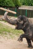 Elephant - detail Royalty Free Stock Photography