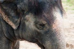 Elephant - detail Stock Images