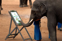 Elephant drawing.[3]. When cutting wood were banned in the Forest.Elephant owners[ Mahout] to practicing drawing elephants.To show.And sold to the tourists stock image