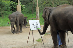 An elephant is drawing a picture. Of another elephant royalty free stock photography