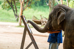 Elephant drawing a picture. On elephants show at northern of Thailand royalty free stock images