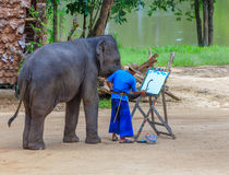 Elephant drawing show. Lampang, Thailand July,2016: Elephant drawing show at The Thai Elephant Conservation Center, July,2016 in Lampang, Thailand royalty free stock image
