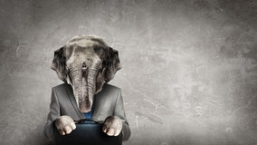 Elephant dressed in business suit . Mixed media Stock Photos