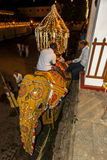 An elephant is dressed in a ceremonial costume within the Temple of the Sacred Tooth Relic complex in Kandy, Sri Lanka prior to th Royalty Free Stock Image