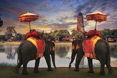 Free Elephant Dressing With Thai Kingdom Tradition Accessories Standing In Front Of Old Pagoda In Ayuthaya World Heritage Site Use For Stock Photo - 44657560