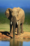Elephant drinking water Stock Photo