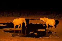 Elephant drinking water at night, Etosha NP, Namibia in Africa. Wild animal on the green meadow. Wildlife nature on African safari. Night safari in Namibia royalty free stock photography