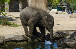 An elephant Stock Images