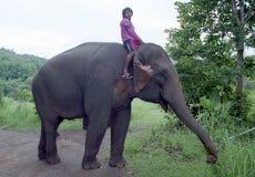 Elephant driver Royalty Free Stock Photo