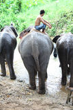 Elephant driver Royalty Free Stock Photo