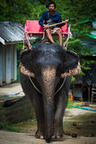 Elephant driver Royalty Free Stock Images